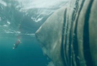 Новый ТВ-ролик фильма «Мег: Монстр глубины»